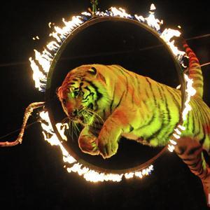 Цирки Тулы