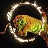 Цирки в Туле