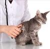 Ветеринарные клиники в Туле